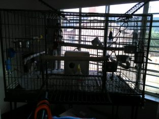 Big bird cage on wheels with all accessories
