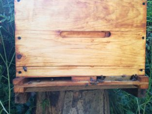 Healthy Bee Hive For Sale